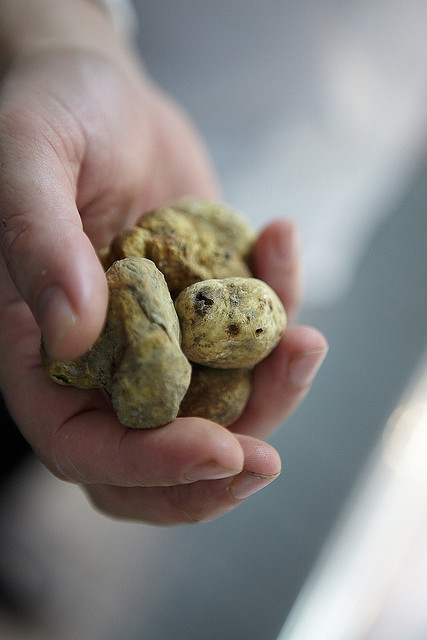 Coveted White Truffles