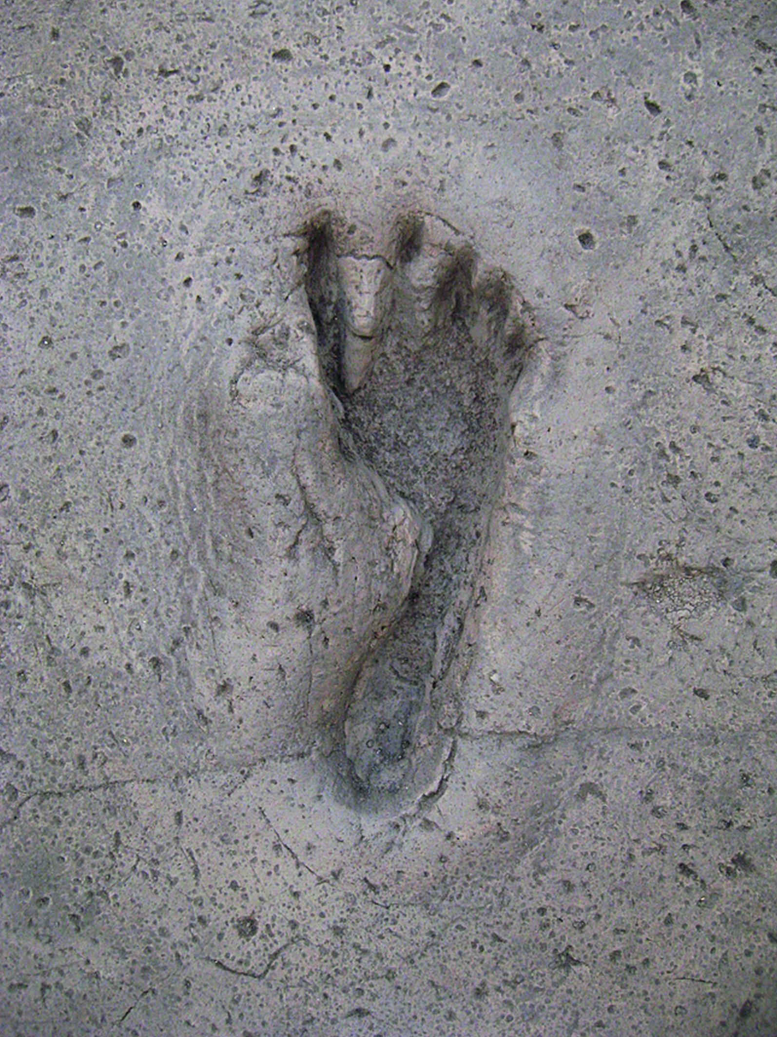 Fig. 4: Detail: The fleeing inhabitants of Nola-Palma Campania have left their footprints in the ash during the prehistoric eruption (Photo © Soprintendenza Speciale per i Beni Archeologici di Napoli e Pompei, N. Castaldo)