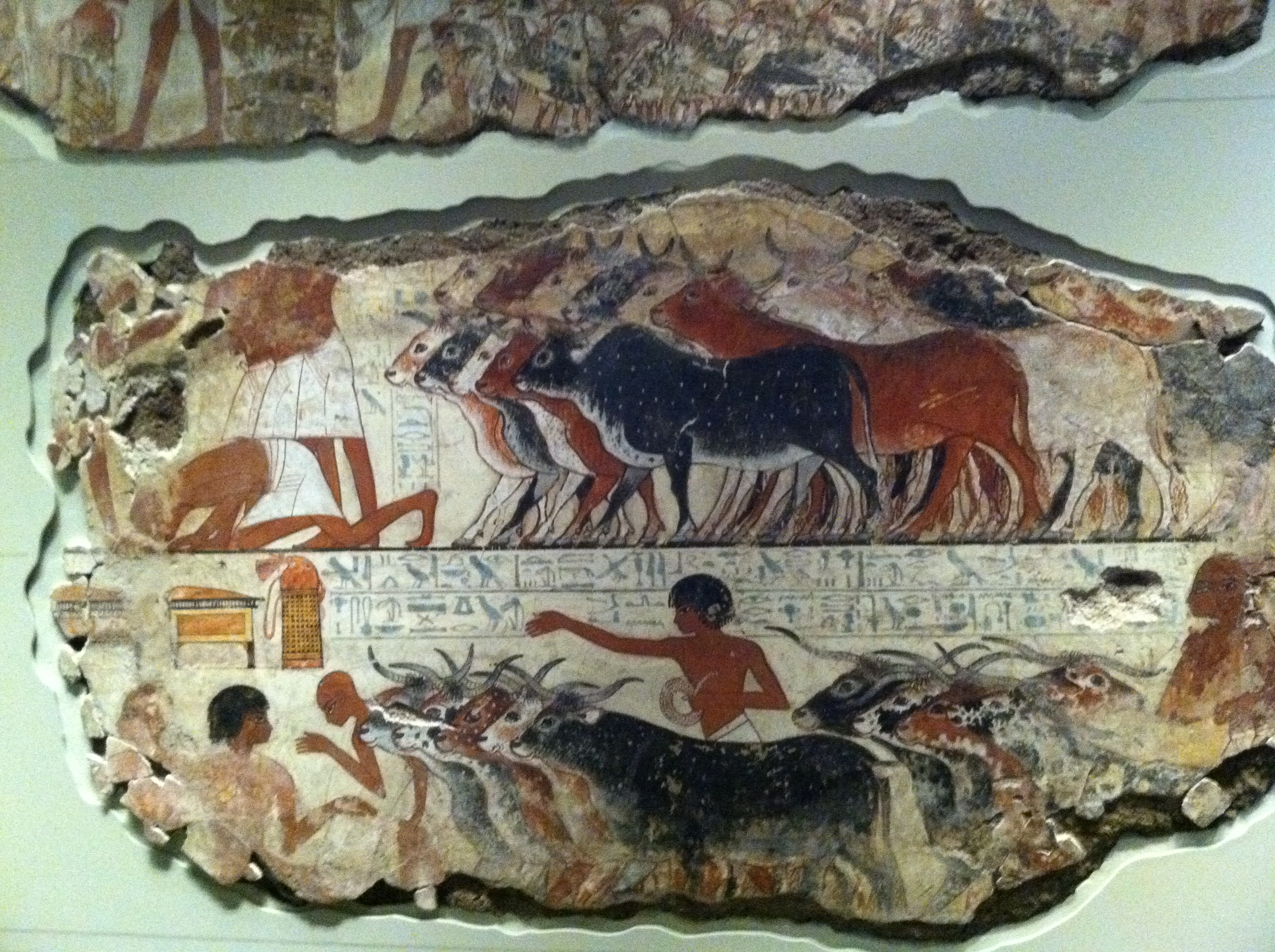 Herding Cattle wall painting from Tomb of Nebamun, ca 1350 BCE, British Museum (Photo P. Hunt, 2013)