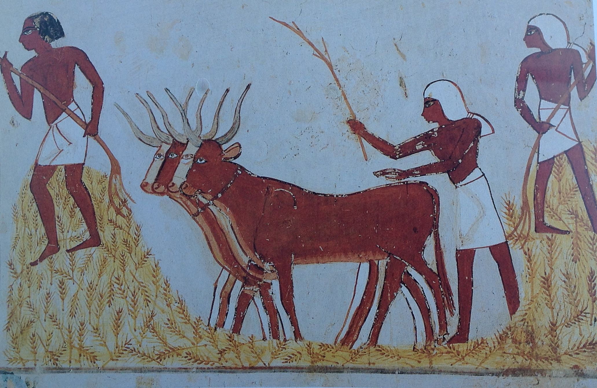 ian kingship and animal husbandry threshing corn 18th dyn gurna tomb of menna image courtesy of