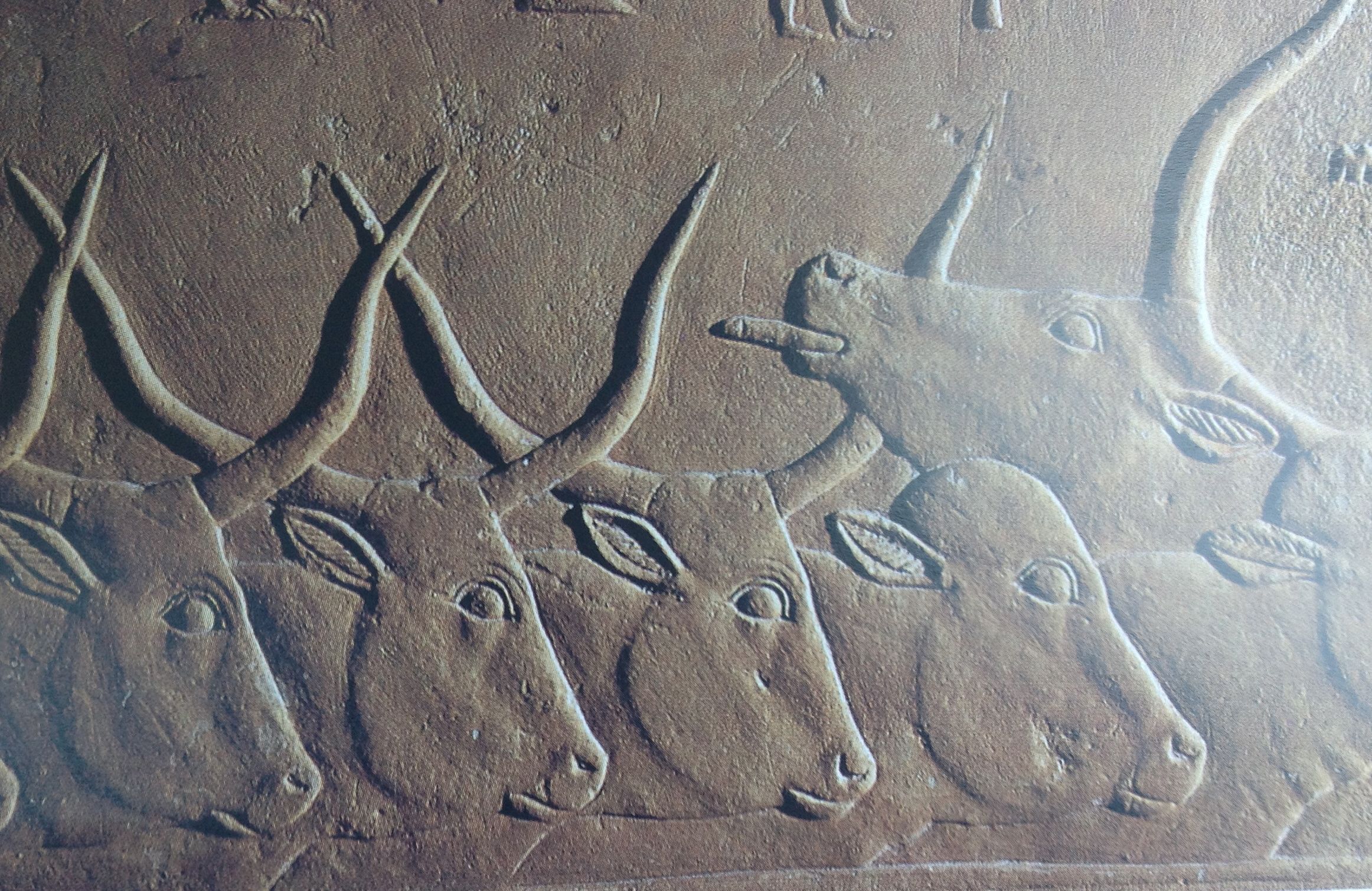 ian kingship and animal husbandry long horned cattle saqqara 6th dyn mastaba of kastjemni image courtesy