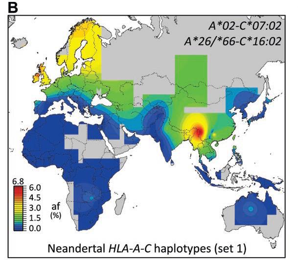neanderthal-HLA-science.jpg